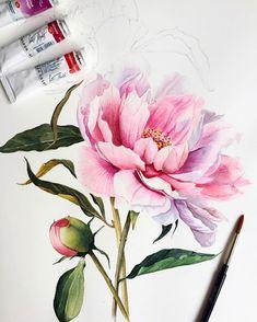 🎨 Watercolor blog (@watercolor.blog) • Instagram photos and videos Watercolor Rose, Watercolor Cards, Watercolor Illustration, Peony Painting, Polychromos, Botanical Art, Flower Art, Art Drawings, Artwork