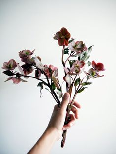 Florists Portland Oregon / Flowers shops Portland / Ohsu florists / Flower delivery South Waterfront / Portland flower delivery / Send flowers