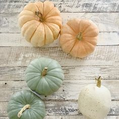 Tips On How To Grow your Own Fairytale Pumpkin Patch | We Lived Happily Ever After Pumpkin Squash, Diy Pumpkin, Planting Pumpkins, Planting Seeds, Squash Flowers, Pumpkin Decorating, Diy Decorating, Fall Decor, Harvest