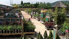 the wellington garden centre - Hľadať Googlom