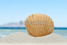 Sea shell in summer on the beach