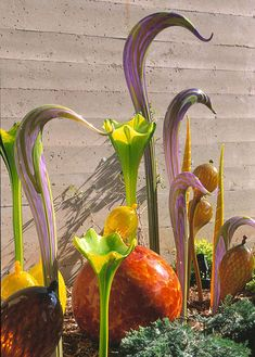 Antonia Jo: Artist Series: Dale Chihuly Glass Sculptures