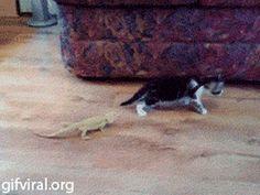 El gato malo
