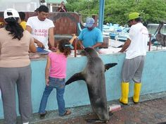customers at the fish market in Puerto Ayora