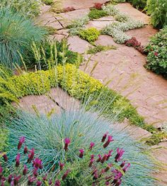 Soften the Edges.  Ground-hugging plants soften the sharp edges of the stone pavers in this garden. Chartreuse-colored thyme between the stones contrasts with the blues of fescue and lavender spilling from the edge of the walkways.