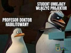 Funny Lyrics, Polish Memes, Very Funny Memes, Sully, Student Life, Have Time, Make You Smile, Sentences, I Laughed