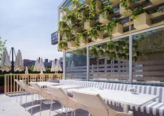 cafe 27, four o nine, indoor planters, daylighting, greenhouse cafe, energy efficient cafe, landscaping, indoor plants, cafe plants, green restaurant, green cafe