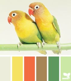 What beautiful colors! These look like sun conures or lorikeets? Anyone? www.homescapes-sd.com #home #staging