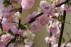 Spring.  https://jestemolaczesc.wordpress.com