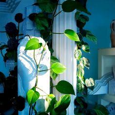 BACK ON TRACK! Ab Montag den 08.02.2021 sind unsere Schauräume wieder zu den üblichen Öffnungszeiten geöffnet! . . #topstuck #stuck #Linz #wohnen #madeinaustria #stucksäule #säule #wiedereröffnung #neueröffnung Stuck, Plant Leaves, Plants, Homes, Linz, Plant, Planets