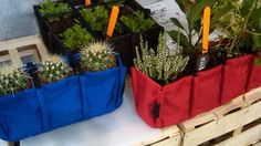 Plantes en sachet
