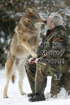 Moon moon introduces​ himself Haha Funny, Funny Cute, Funny Stuff, Funny Memes, Hilarious, Pun Husky, Husky Humor, Cute Funny Animals, Funny Animal Pictures