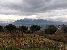 Vineyard, Italy, Mountains, Travel, Outdoor, Outdoors, Italia, Viajes, Vine Yard