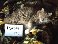 {I snore} I love kitty snores :)