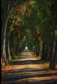 I would love to ride my horse down this road