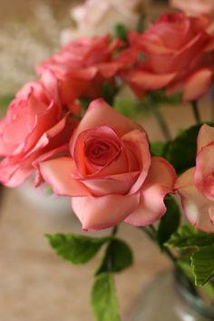 coral roses.