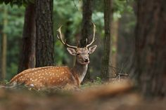 deer screensavers and backgrounds free