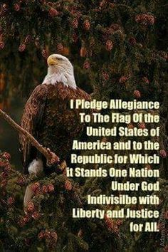 I Pledge!