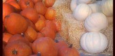 19 #paleo pumpkin recipes