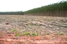 Biomassa e Bioenergia