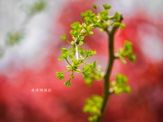 Leaves 12 by Wei-San Ooi  on 500px