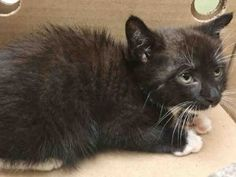 HAS TROUBLE WALKING WITH HIND LEGS -POSS TRAUMA / INTERNAL INJURIES - NEEDS URGENT MEDICAL AND FOSTER ASAP!!