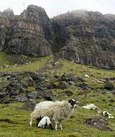 Isle of Skye... Dramatic views, narrow roads, and lots of sheep