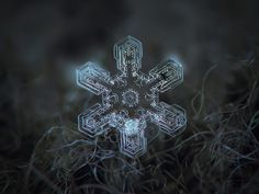Macro photography of natural snowflakes, snow and hoarfrost crystals (printable versions here: snowflakes for print, wallpaper versions in album snowflake wallpapers or in blog).  My current equipment: simple macro setup, containing compact camera Canon Powershot A650is and lens Helios 44M-5, reverse mounted in front of camera's built-in optics (it serves as magnifier and provides much better images than camera's standard macro mode).  I wrote detailed article about my snowflake shooting…