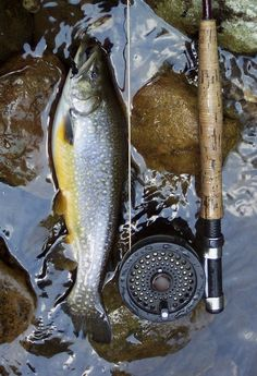 The Beauty of Fly Fishing  #Fishing #FlyFishing   @thedailybasics ♥♥♥