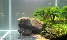 Love the rock and the lakeshore, cool for a smaller aquarium ~inspiration