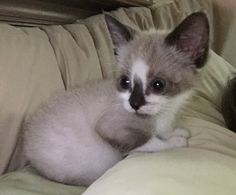 Zoe @ 9 1/2 weeks. She's still so tiny.  July 24, 2015. We want to adopt her but have to wait until she can get spayed. The way she is growing, that will take awhile!