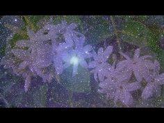 Θέμης Αδαμαντίδης - Η νύχτα μυρίζει γιασεμί