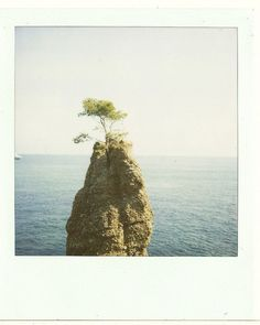 vacation: Polaroid