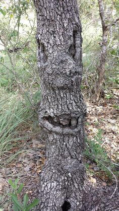 Smiling Tree Face kinda takes the majestic & beautiful to a whole new level. (Crazy Beauty Art)