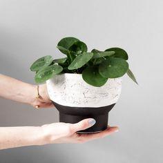Make a planter with raku effect. Tutorial in spanish