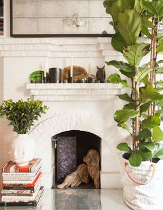 A fiddle leaf fig tree sits beside a whitewashed brick fireplace in Christiana Coop's San Francisco apartment.