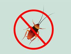 Home Remedies to Get Rid of Roaches-The roach is a common ...