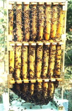 A fantastic opportunity for us to see what happens inside a Warre hive