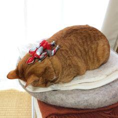 11.5K 個讚,63 則留言 - Instagram 上的 @komagram2015:「 ダブルでごめん寝  #猫 #茶トラ #cat 」