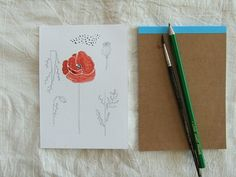the anatomy of a poppy in pen and ink and watercolor