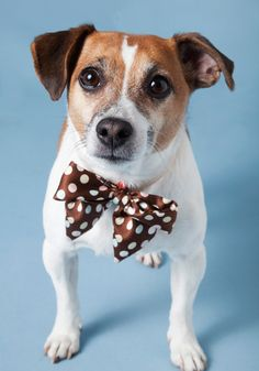 Happy Tails Dog Collar