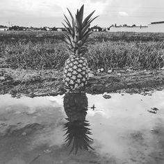 #shadow #blackandwhite #baw #grey #pineapple #ananas #fruit #vegan #veganfoodporn #veganlife #whatveganseat #outside #nature #water #fit #healthy #paleo  Yummery - best recipes. Follow Us! #veganfoodporn