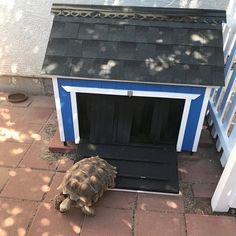 Tortoise House, Tortoise Habitat, Turtle Habitat, Outdoor Tortoise Enclosure, Reptile Enclosure, Turtle Enclosure, Reptiles, Reptile House, Reptile Cage