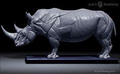 Rhino Anatomy model at 1/16th scale - flesh & superficial muscle – Jun's anatomy