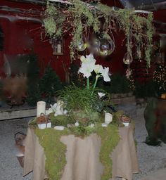 Tablescape with moss  From the design studio at The Barn Nursery, Chattanooga, TN  110213  #holiday centerpieces #moss table #moss centerpiece #Christmas decorations #chandelier #twig chandelier www.barnnursery.com/blog