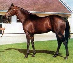 Mill Reef. European Champion, winner of the Epsom Derby and the Arc, Mill Reef survived a serious injury and became a very Influential sire. His line lives on through Shirley Heights, Reference Point and his grand son Darshaan.