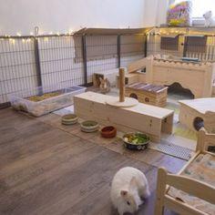 Bunny Cages, Rabbit Cages, Rabbit Pen, Pet Rabbit, Bunny Play Pen, Diy Bunny Toys, Indoor Rabbit Cage, Rabbit Enclosure, Bunny Room