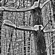 #treeworld #treeworld_bnw - @norwoodsworld- #webstagram