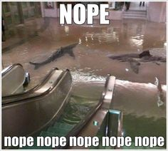 ALL ABOARD THE NOPE TRAIN, SOUTH-BOUND FOR NOPEVILLE <--- that caption.  :D