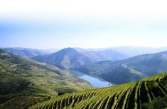 Terrazas de viñas verdes en Portugal | Via El Viajero_El País | 24/05/2016 De Oporto a Barca d'Alva, interminables bancales de viñedos cambian de tonalidad, del pardo al dorado, según la estación #Portugal